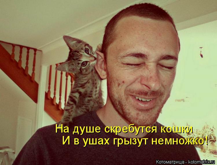 Котоматрица: На душе скребутся кошки И в ушах грызут немножко!