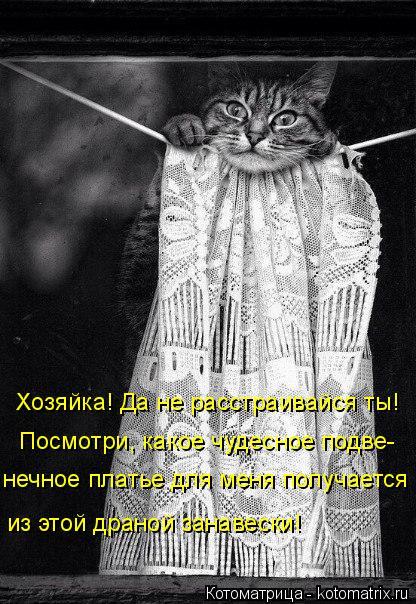 Котоматрица: Хозяйка! Да не расстраивайся ты! Посмотри, какое чудесное подве- нечное платье для меня получается из этой драной занавески!
