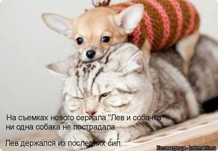"""Котоматрица: На съемках нового сериала """"Лев и собачка"""" ни одна собака не пострадала. Лев держался из последних сил."""