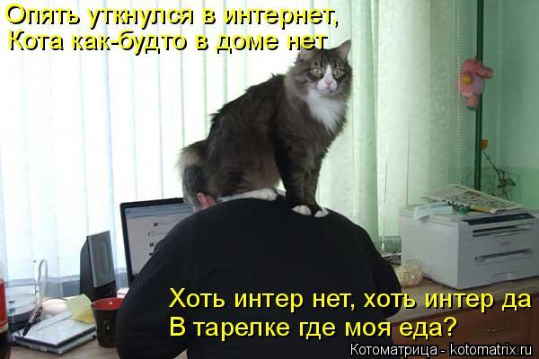 Котоматрица: Опять уткнулся в интернет, Кота как-будто в доме нет В тарелке где моя еда? Хоть интер нет, хоть интер да