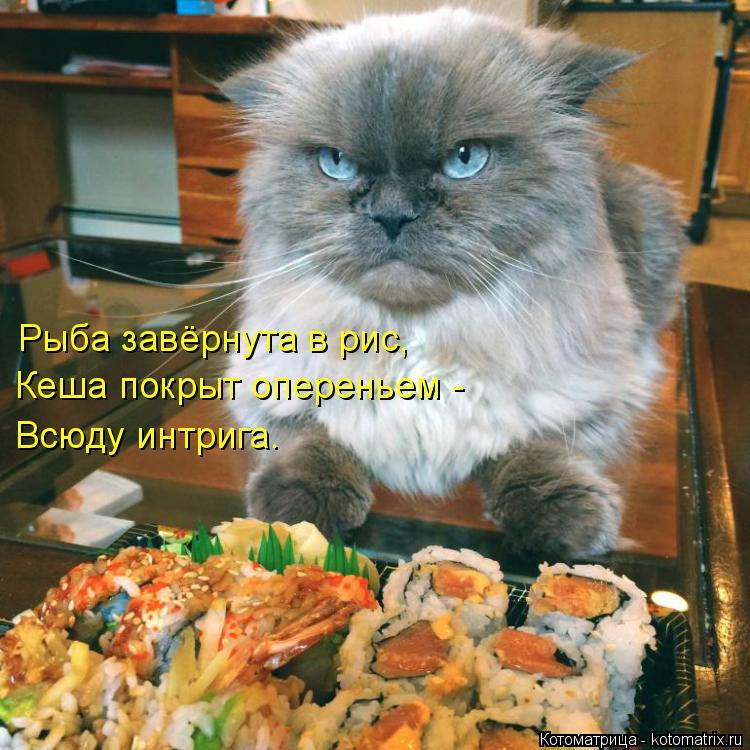Котоматрица: Рыба завёрнута в рис, Кеша покрыт опереньем - Всюду интрига.