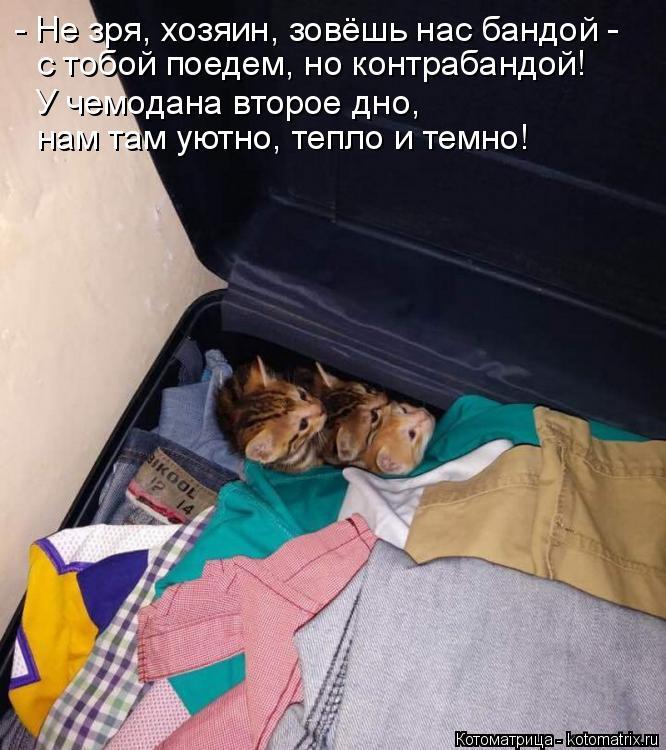 Котоматрица: - Не зря, хозяин, зовёшь нас бандой - с тобой поедем, но контрабандой! У чемодана второе дно, нам там уютно, тепло и темно!