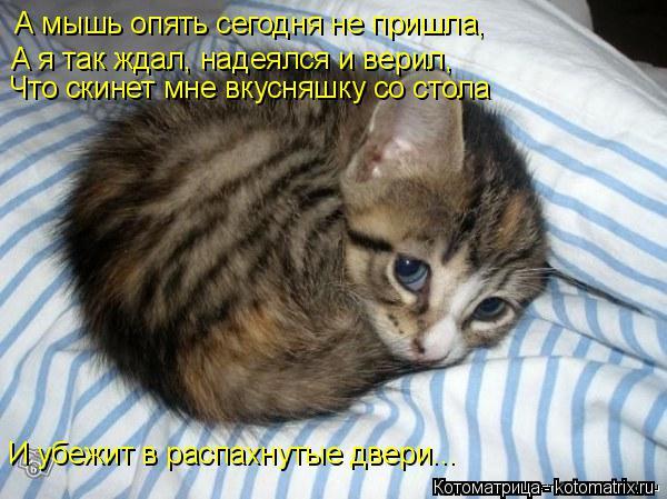 Котоматрица: А мышь опять сегодня не пришла,  А я так ждал, надеялся и верил,  Что скинет мне вкусняшку со стола И убежит в распахнутые двери...