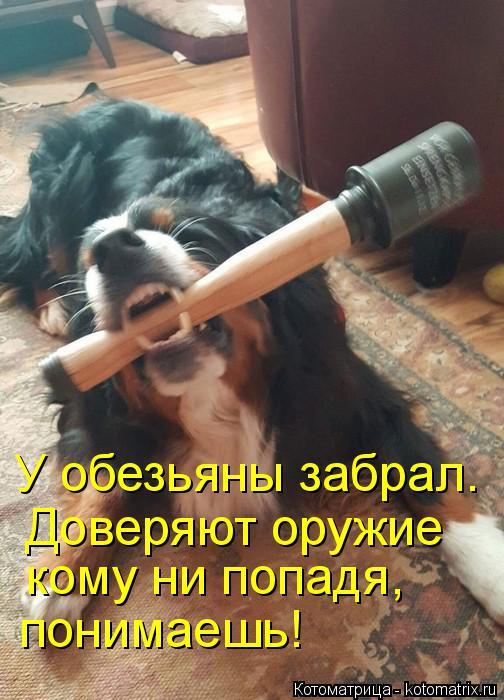 Котоматрица: У обезьяны забрал. Доверяют оружие кому ни попадя, понимаешь!