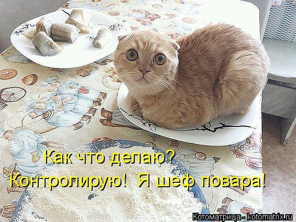 Котоматрица: Как что делаю? Контролирую!  Я шеф повара!