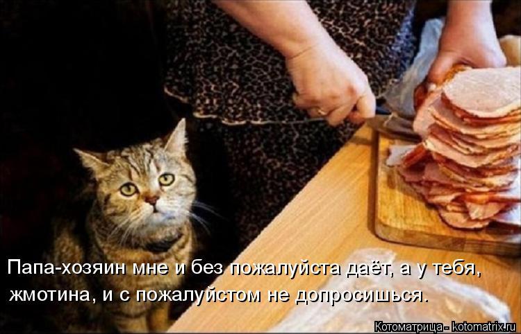 Котоматрица: Папа-хозяин мне и без пожалуйста даёт, а у тебя, жмотина, и с пожалуйстом не допросишься.