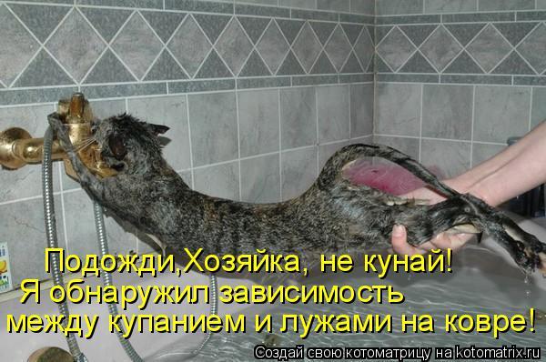 Котоматрица: Подожди,Хозяйка, не кунай! Я обнаружил зависимость  между купанием и лужами на ковре!