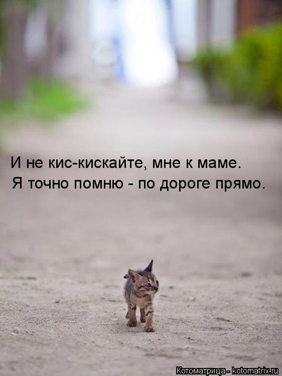 Котоматрица: И не кис-кискайте, мне к маме. Я точно помню - по дороге прямо.