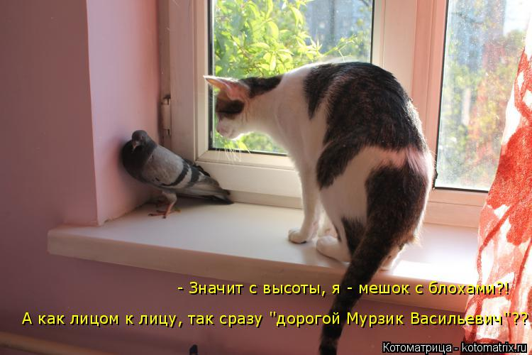Котоматрица: - Значит с высоты, я - мешок с блохами?! А как лицом к лицу, так сразу ''дорогой Мурзик Васильевич''??