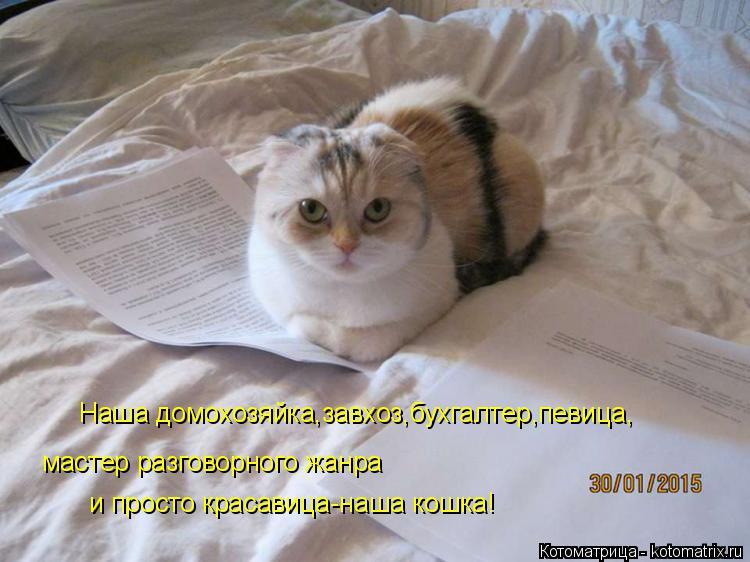 Котоматрица: Наша домохозяйка,завхоз,бухгалтер,певица, мастер разговорного жанра   и просто красавица-наша кошка!