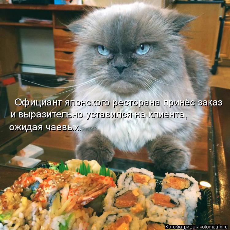 Котоматрица: Официант японского ресторана принёс заказ и выразительно уставился на клиента,  ожидая чаевых.