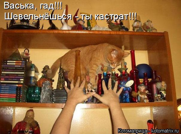 Котоматрица: Васька, гад!!!  Шевельнёшься - ты кастрат!!!