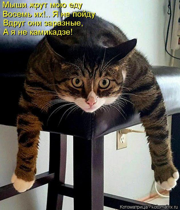 Котоматрица: Мыши жрут мою еду Восемь их!.. Я не пойду Вдруг они заразные, А я не камикадзе!