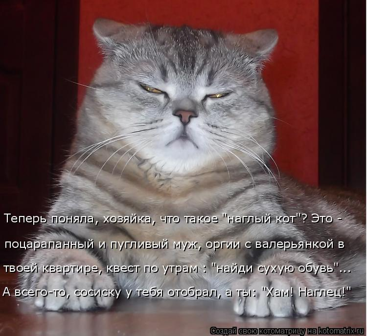"""Котоматрица: Теперь поняла, хозяйка, что такое """"наглый кот""""? Это - поцарапанный и пугливый муж, оргии с валерьянкой в твоей квартире, квест по утрам : """"найди"""