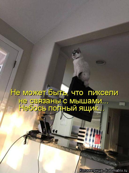 Котоматрица: Не может быть, что  пиксели не связаны с мышами... Небось полный ящик...