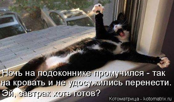 Котоматрица: Ночь на подоконнике промучился - так на кровать и не удосужились перенести. Эй, завтрак хоть готов?