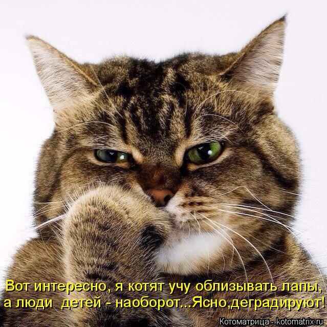 Котоматрица: Вот интересно, я котят учу облизывать лапы, а люди  детей - наоборот...Ясно,деградируют!