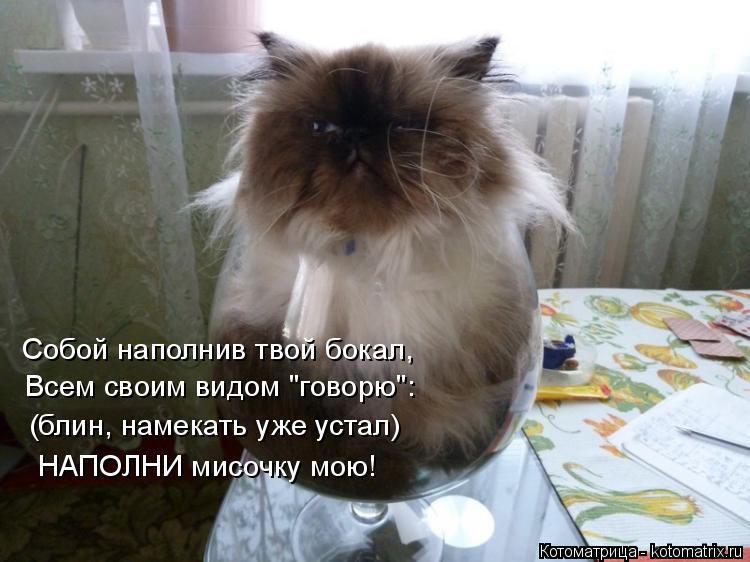 """Котоматрица: Собой наполнив твой бокал, Всем своим видом """"говорю"""": (блин, намекать уже устал) НАПОЛНИ мисочку мою!"""