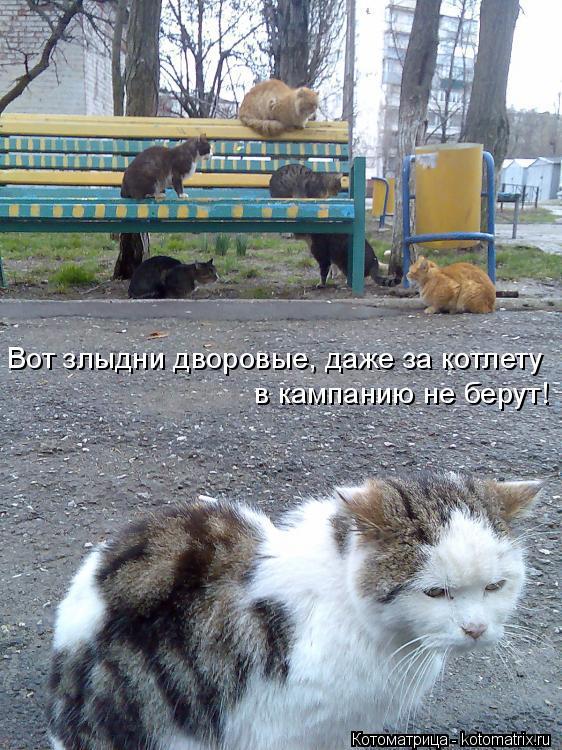 Котоматрица: Вот злыдни дворовые, даже за котлету в кампанию не берут!