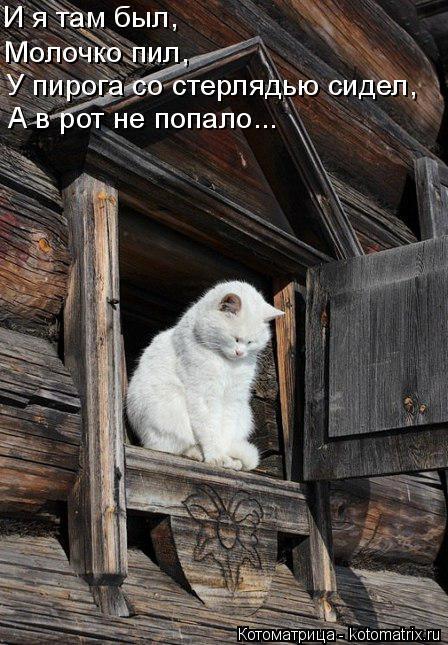 Котоматрица: И я там был,  Молочко пил, У пирога со стерлядью сидел, А в рот не попало...