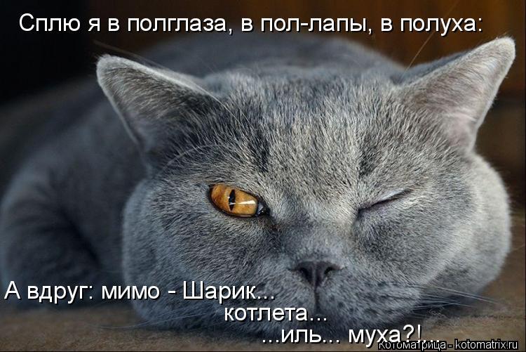 Котоматрица: Сплю я в полглаза, в пол-лапы, в полуха: А вдруг: мимо - Шарик... котлета... ...иль... муха?!...