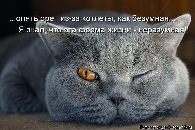 Котоматрица: ...опять орет из-за котлеты, как безумная... Я знал, что эта форма жизни - неразумная!!
