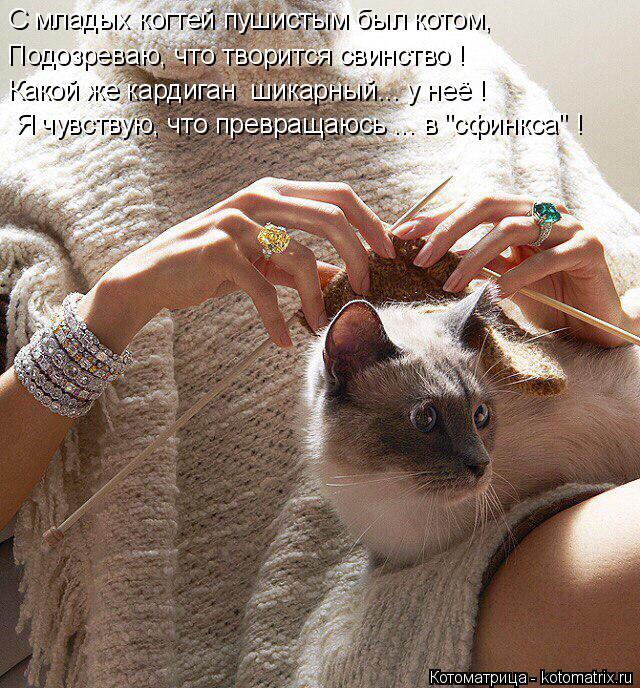"""Котоматрица: С младых когтей пушистым был котом, Подозреваю, что творится свинство ! Какой же кардиган  шикарный... у неё ! Я чувствую, что превращаюсь ... в """""""