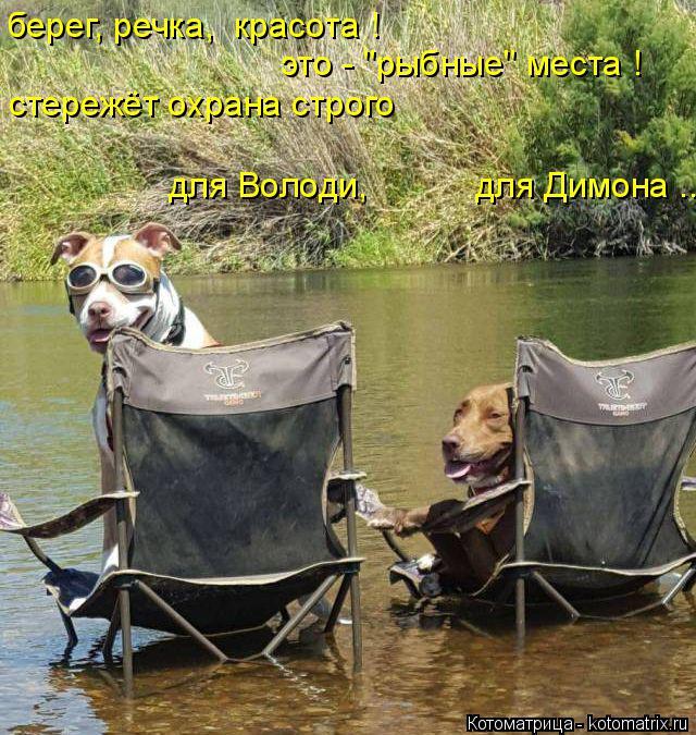 """Котоматрица: берег, речка,  красота ! это - """"рыбные"""" места ! стережёт охрана строго для Володи,           для Димона ..."""