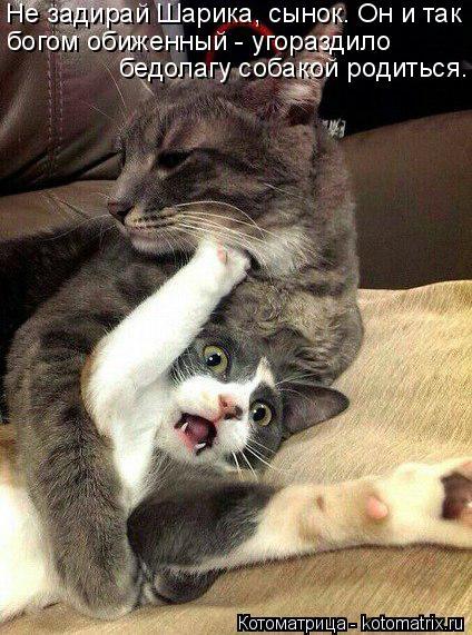 Котоматрица: Не задирай Шарика, сынок. Он и так богом обиженный - угораздило  бедолагу собакой родиться.