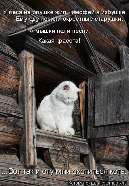 Котоматрица: А мышки пели песни.  Ему еду носили окрестные старушки. У леса на опушке жил Тимофей в избушке,  Какая красота! ...Вот так и отучили охотиться к