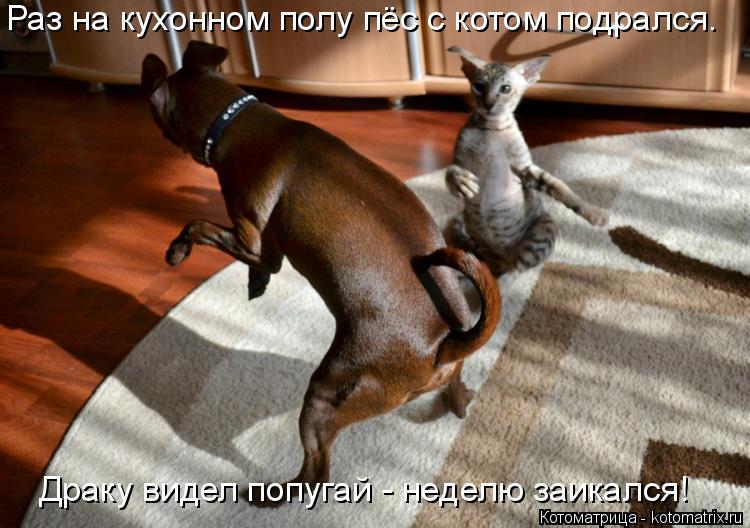 Котоматрица: Раз на кухонном полу пёс с котом подрался. Драку видел попугай - неделю заикался!