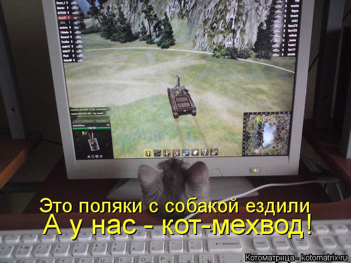 Котоматрица: А у нас - кот-мехвод!  Это поляки с собакой ездили
