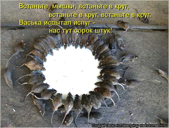 Котоматрица: Встаньте, мышки, встаньте в круг, встаньте в круг, встаньте в круг. Васька испытал испуг - нас тут сорок штук!