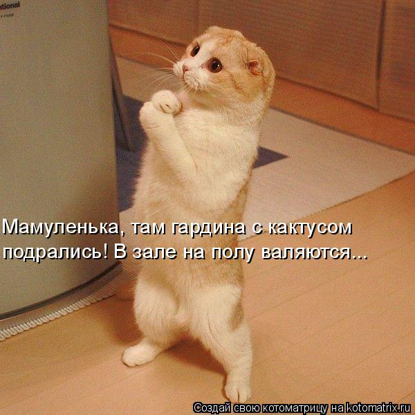Котоматрица: Мамуленька, там гардина с кактусом  подрались! В зале на полу валяются...