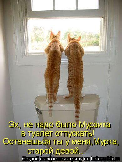 Котоматрица: Эх, не надо было Мурзика в туалет отпускать! Останешься ты у меня,Мурка, старой девой...