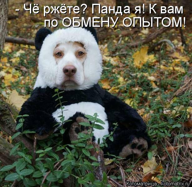 Котоматрица: по ОБМЕНУ ОПЫТОМ!  - Чё ржёте? Панда я! К вам