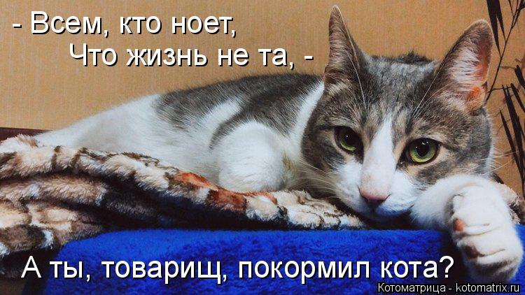 Котоматрица: А ты, товарищ, покормил кота? - Всем, кто ноет,  Что жизнь не та, -