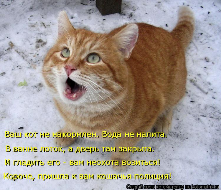 Котоматрица: Короче, пришла к вам кошачья полиция! И гладить его - вам неохота возиться! Ваш кот не накормлен. Вода не налита. В ванне лоток, а дверь там зак