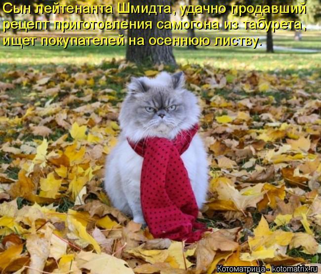 Котоматрица: Сын лейтенанта Шмидта, удачно продавший рецепт приготовления самогона из табурета, ищет покупателей на осеннюю листву.