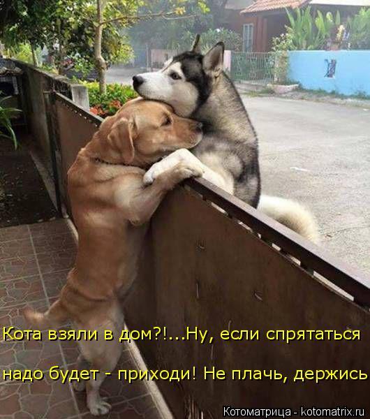Котоматрица: Кота взяли в дом?!...Ну, если спрятаться надо будет - приходи! Не плачь, держись...