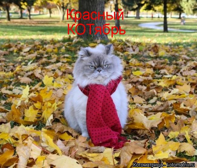 Котоматрица: Красный КОТябрь