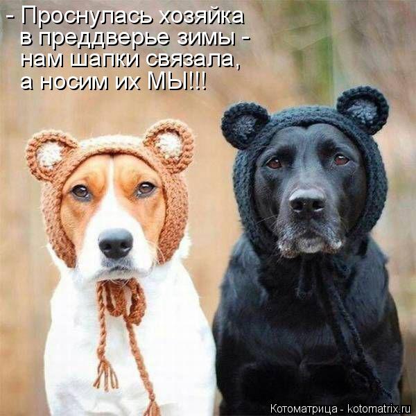 Котоматрица: - Проснулась хозяйка в преддверье зимы - нам шапки связала, а носим их МЫ!!!