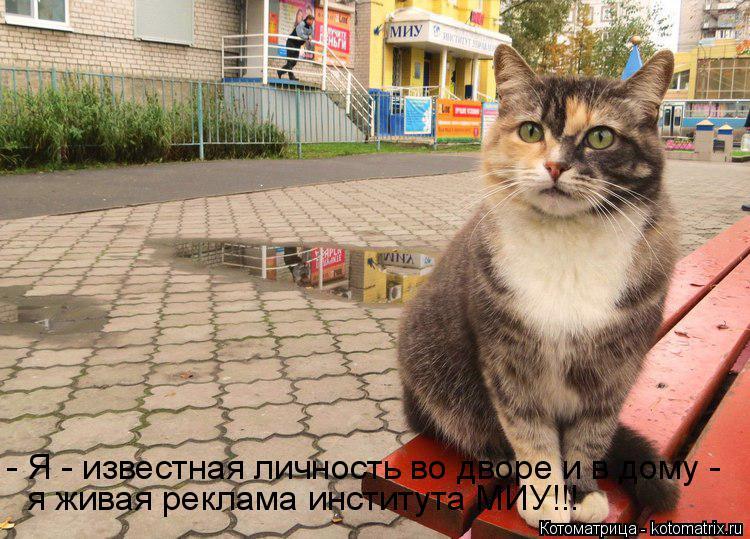 Котоматрица: - Я - известная личность во дворе и в дому - я живая реклама института МИУ!!!
