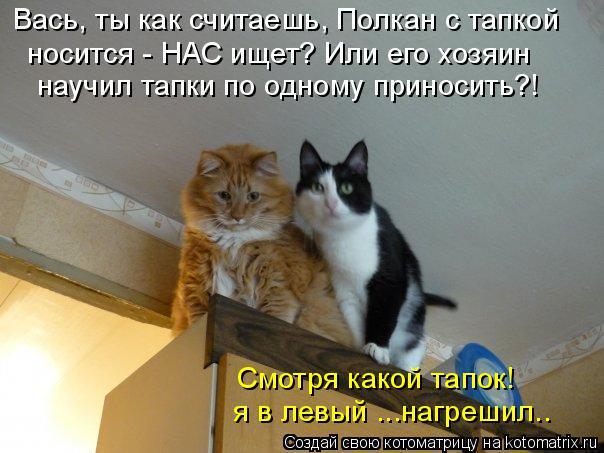 Котоматрица: Вась, ты как считаешь, Полкан с тапкой носится - НАС ищет? Или его хозяин  научил тапки по одному приносить?! Смотря какой тапок! я в левый ...на