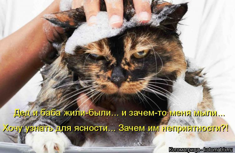 Котоматрица: Дед и баба жили-были... и зачем-то меня мыли... Хочу узнать для ясности... Зачем им неприятности?!