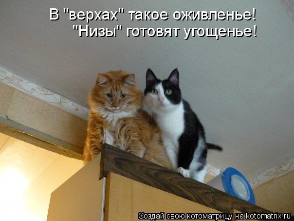 """Котоматрица: В """"верхах"""" такое оживленье! """"Низы"""" готовят угощенье!"""