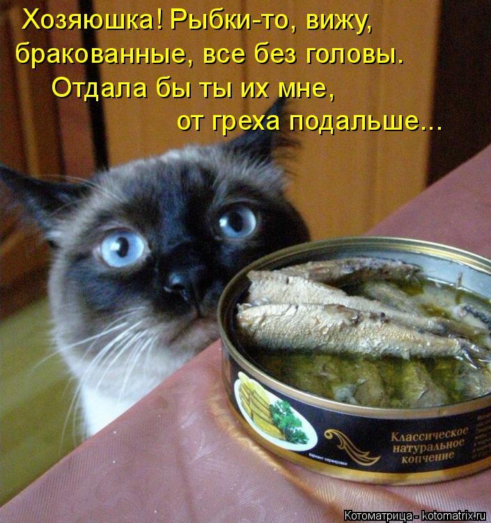Котоматрица: Хозяюшка! Рыбки-то, вижу, бракованные, все без головы. Отдала бы ты их мне,  от греха подальше...