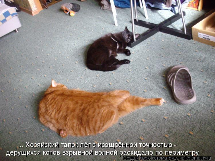 Котоматрица: дерущихся котов взрывной волной раскидало по периметру. ... Хозяйский тапок лёг с изощрённой точностью -