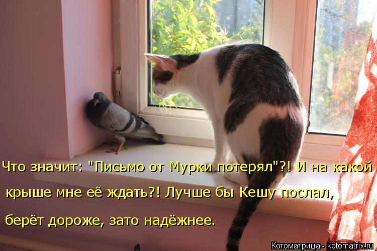 """Котоматрица: Что значит: """"Письмо от Мурки потерял""""?! И на какой  крыше мне её ждать?! Лучше бы Кешу послал,  берёт дороже, зато надёжнее."""