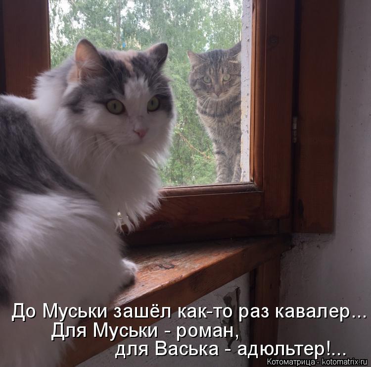 Котоматрица: До Муськи зашёл как-то раз кавалер... Для Муськи - роман, для Васька - адюльтер!...